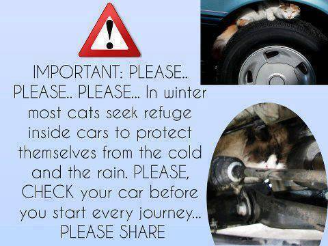 Take Care, Cats Hide Under Cars in Rain
