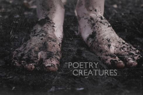 The Poetry of Creatures at Dar Bistro & Books