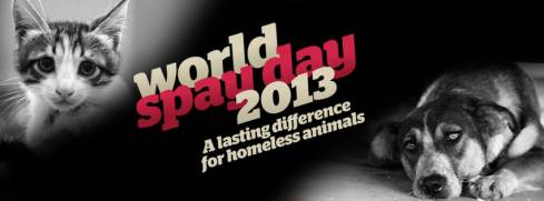 Spay Day 2013 with Animals Lebanon